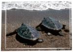Turtles on beach